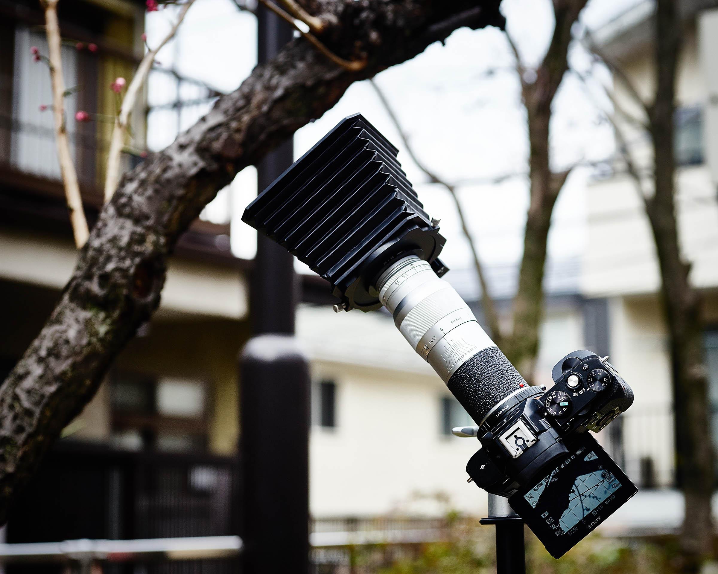 比較的お安く手に入るライカレンズの「ヘクトール135mmF4.5」で梅花を撮る