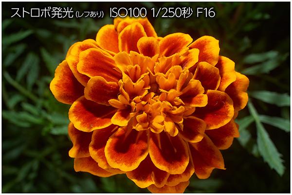 frexi-bo_close-up_003